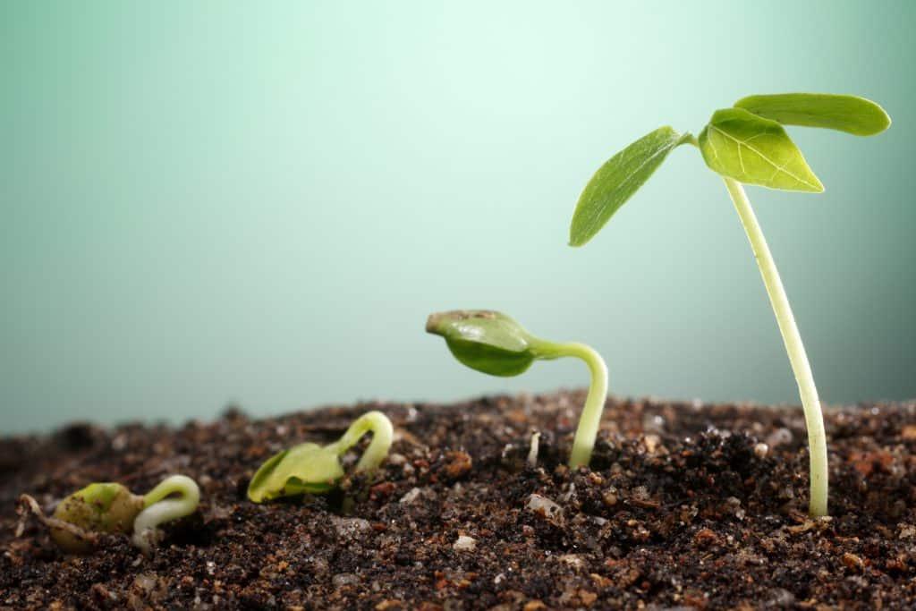grow as a writer