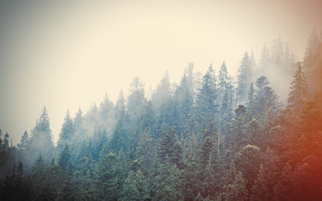 The Everlasting Importance of Evergreen Content