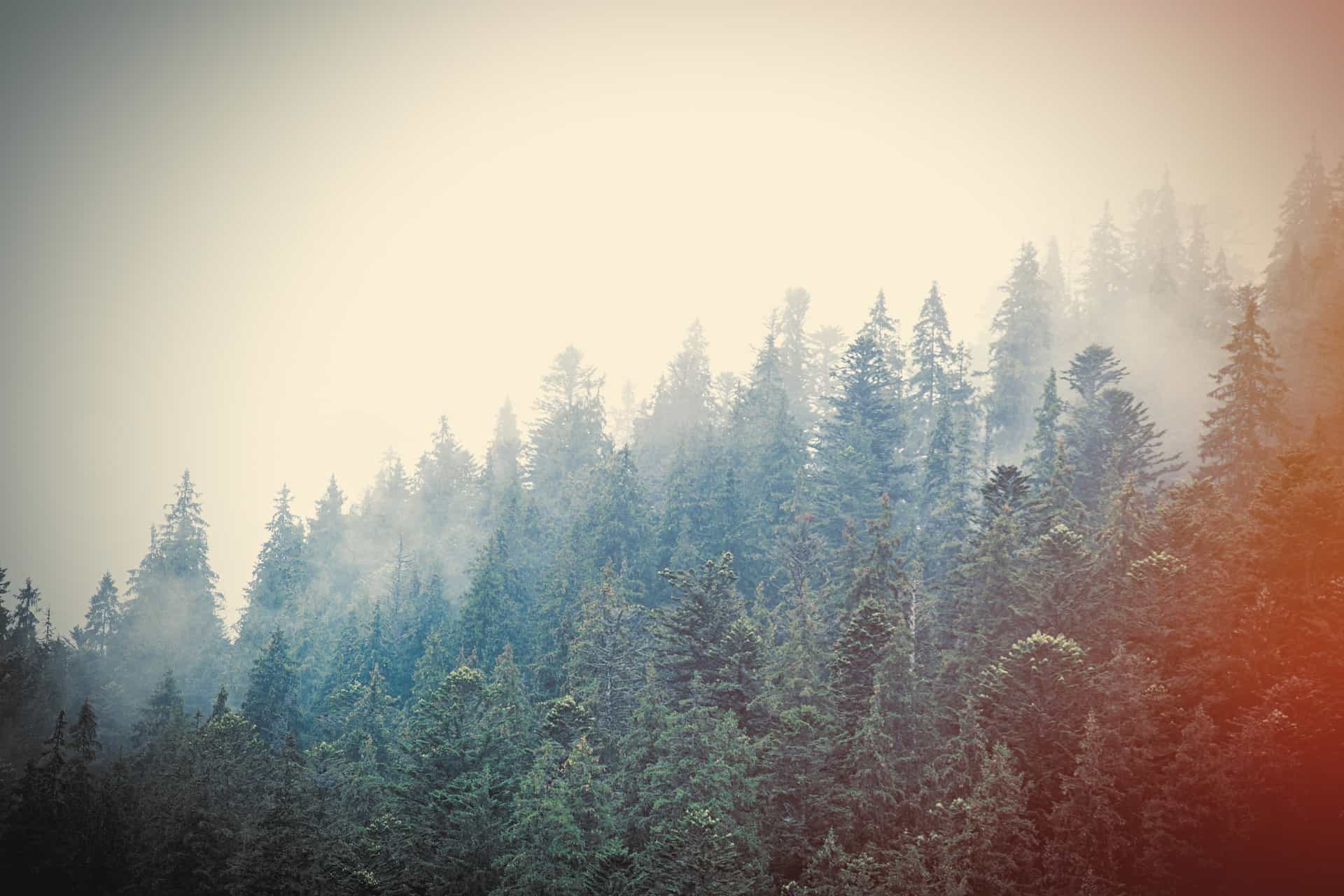 creative content writing and evergreen content